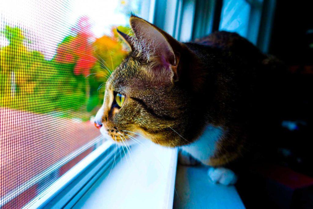 Москитная-сетка-на-окне